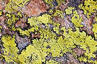 Lichen on rock - Europe, France, Haute Savoie, Aiguilles Rouges, Lacs des Chesery - Noon - September 2008