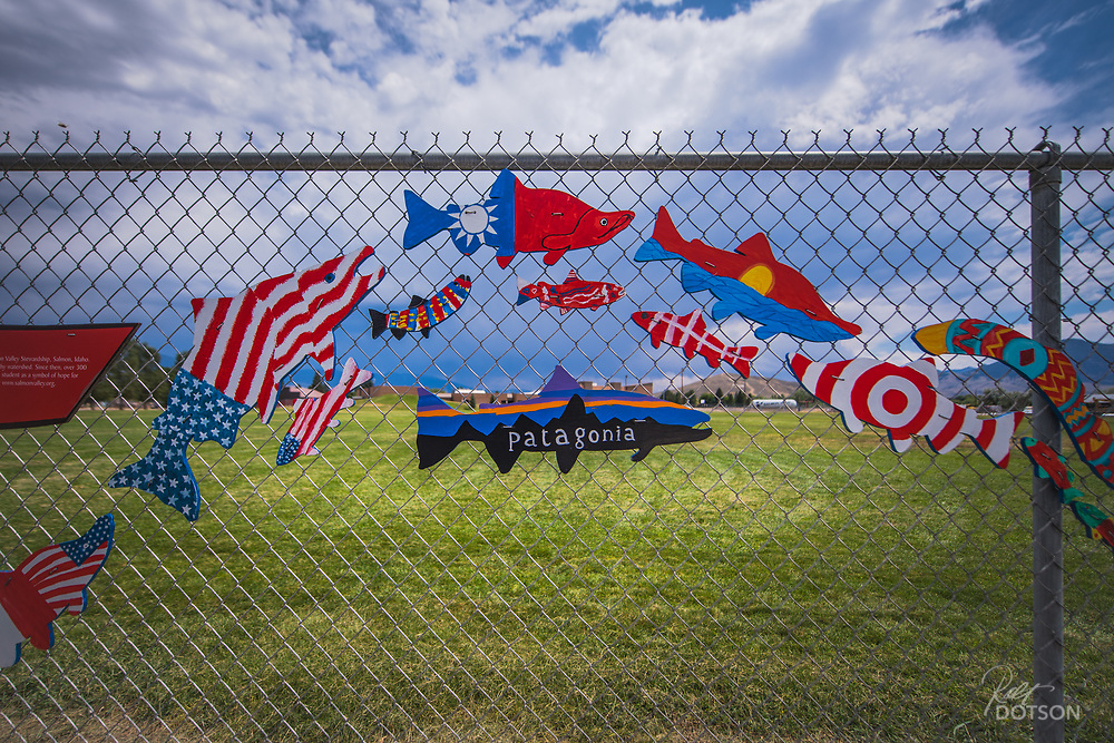 Swimming the fence line at Salmon, Idaho's high school, artistic fish fill the full length of one side of the school to bring awareness to salmon and the vital role they play in the environment.