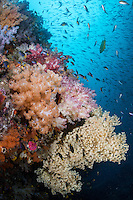 Reef fish and Soft Corals<br /> <br /> Shot in Indonesia