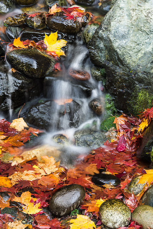 Domestic garden waterfall, autumn leaves, October, overcast, Pierce County, Tacoma, Washington, USA