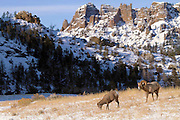 """Images from 2011 """"Battling Bighorns' Photo Tour"""