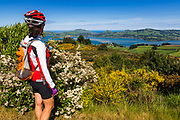 Cyclist enjoying the view of the Otago Peninsula and Harbor from Mount Cargill, Otago, South Island, New Zealand (MR)