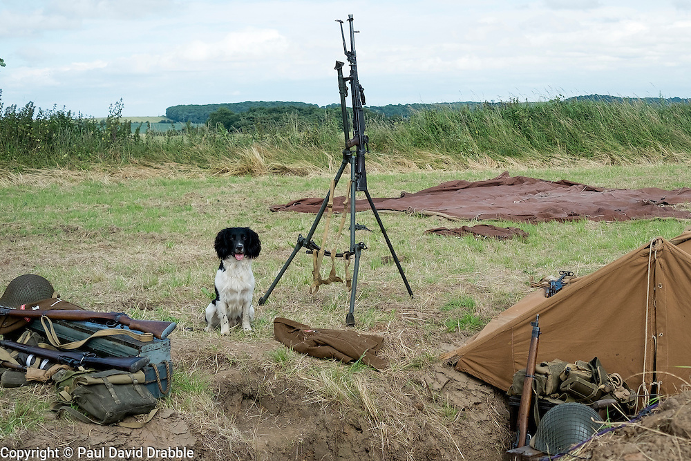 British Guard Dog... Dont let the cut looks fool you Broc has taken down Messerschmitts and Stukas with that  Bren<br />  17 July 2016<br />  Copyright Paul David Drabble<br />  www.pauldaviddrabble.photoshelter.com