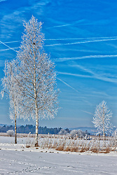 Snow covered trees and field against sky