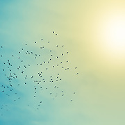 A flock of birds circling in the sky on a hazy day above the town of Chatel in the French Alps.<br />