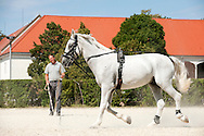 Lipica Stud Farm, Slovenia. Lipizzaner horses have been bred at Lipica since 1580. © Rudolf Abraham