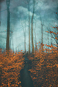 fallen/ cut tree in a deciduous forest on a misty morning - manipulated photograph