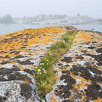 Lichen-covered rocks in Kallskär. Stockholm Archipelago, Sweden
