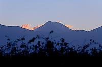HOJAS DE VINEDO Y VOLCAN TUPUNGATO (6550 msnm), VALLE DE UCO, TUPUNGATO, PROVINCIA DE MENDOZA, ARGENTINA