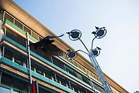 DEU, Deutschland, Germany, Stuttgart, 14.09.2020: Tauben sitzen auf einer modernen Straßenlaterne mit LED Technik, Königstrasse Ecke Arnulf-Klett Platz beim Stuttgarter Hauptbahnhof. In dem Gebäude in der Königstrasse befindet sich u.a. die Touristinformation der Stadt.