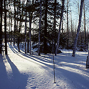 Minnesota, evening sun casts shadows over Norway pine and birch forest. Winter.
