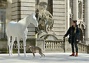 """© Licensed to London News Pictures. 05/03/2013. Westminster, UK. Dolly Feaver and her 9 and a half year old whippet """"Flint"""" inspect the sculpture. The British Council - the UK's international organisation for educational opportunities and cultural relations - unveils a new sculpture, The White Horse by Mark Wallinger, outside its headquarters on The Mall in London, as it announces £7 million of extra investment in its work to connect the best of the UK's creative talent with the world. The statue, made of marble and resin, is a life-size representation of a thoroughbred racehorse. It has been created using state-of the-art technology in which a live horse was scanned using a white light scanner, producing an accurate representation of the animal. It will be on display for two years, before touring overseas. Photo credit : Stephen Simpson/LNP"""