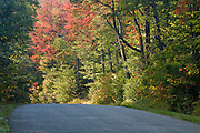 Road through trees starting to turn fall colors