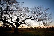 Uniao de Minas_MG, Brasil...Arvore em uma paisagem em Uniao de Minas...The tree in the landscape in Uniao de Minas...Foto: LEO DRUMOND / NITRO