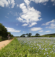 Cycle path on the Isle of Wight.