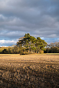 Coniferous trees in rural scene and stubble field under cloudy sky of rain clouds in the Cotswolds at Bruern, Oxfordshire, UK