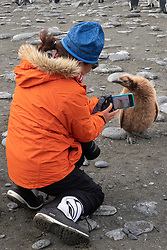 Photographing King Penguin Chick