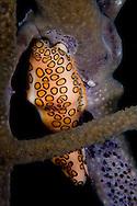 Florida Keys reef creature