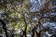 Sao Romao_MG, Brasil...Municipio de Sao Romao, Minas Gerais...The Sao Romao community, Minas Gerais...Foto: LEO DRUMOND / NITRO