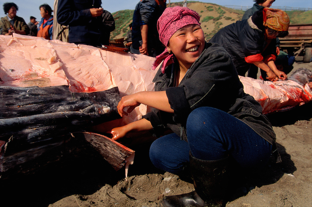 Smiling Chukchi woman carving off meat from a  Grey Whale in the village of Lorino, Chukotka, Siberia, Russia, Arctic