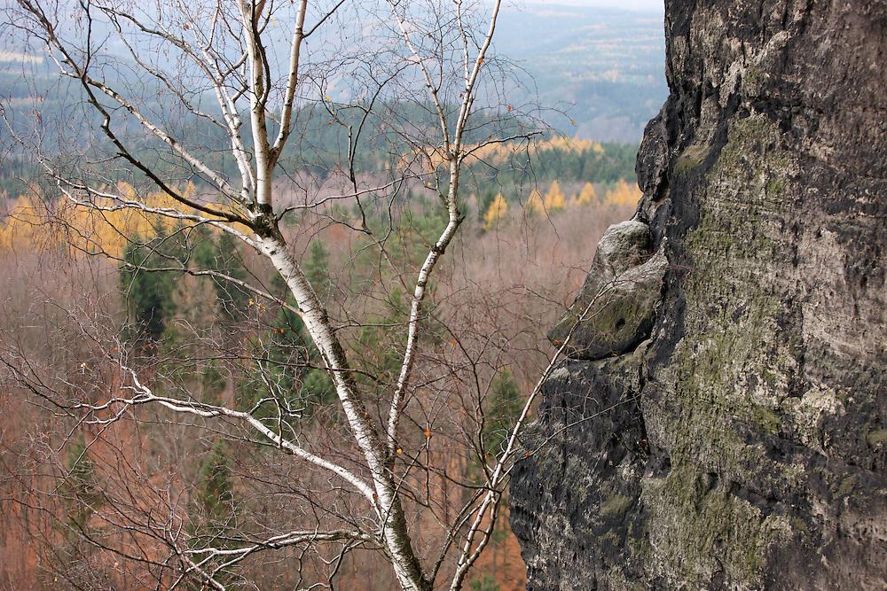 LANDSCAPE FROM STRIBRNE STENY, 459 m. BETULA PENDULA. HRENSKO. CESKE SVYCARSKO. CZECH REPUBLIC.