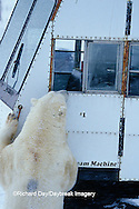 01874-06204 Polar Bear (Ursus maritimus)  & Tundra Buggy   Churchill  MB