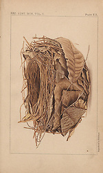 Descriptive catalogue of the nests & eggs of birds found breeding in Australia and Tasmania /<br /> Sydney :F.W. White, general printer,1889.<br /> https://biodiversitylibrary.org/page/57793279