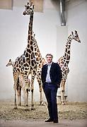 Nederland, Arnhem, 9-4-2013Alex van Hooff, directeur van dierentuin Burgers Zoo. In het giraffenverblijf met een jonge giraffe.Foto: Flip Franssen/Hollandse Hoogte