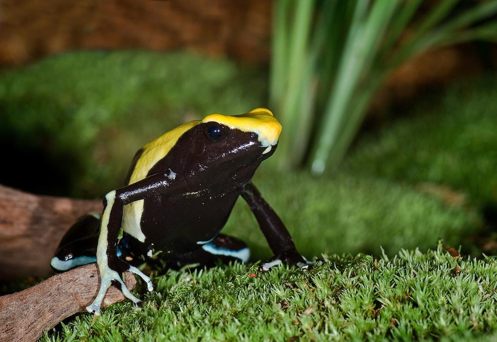 French Guina, Surinam - South America
