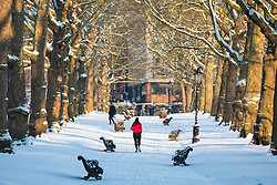 © Licensed to London News Pictures. 28/02/2018. London, UK. A woman jogging in Green Park after heavy overnight snowfall in London as the 'Beast from the East brings freezing Siberian air to the UK. Photo credit: Rob Pinney/LNP