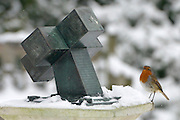 © Licensed to London News Pictures. 19/01/2013. Kew, UK A robin rests on a sculpture. People enjoy the snow at Kew Gardens in West London today 19th January 2013. More cold weather and snow are expected over the coming days.  Photo credit : Stephen Simpson/LNP