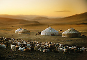 A summer settlement of yurts, also called Gers, in Western Mongolia, in the Province of Bayan Olgii, at the base of the Tsaast uul mountain. Husbandry is the main livelihood in Mongolia, but was victim of severe drough in the past few years.