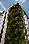Green building covered in growing plants, designed as an ecological architectural work to assist in cleaning the air on Piccadilly in central London, UK.