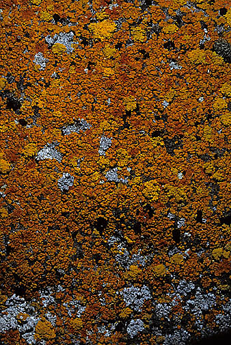 Antarctica, Rocks covered with lichens. Antarctica Peninsula.