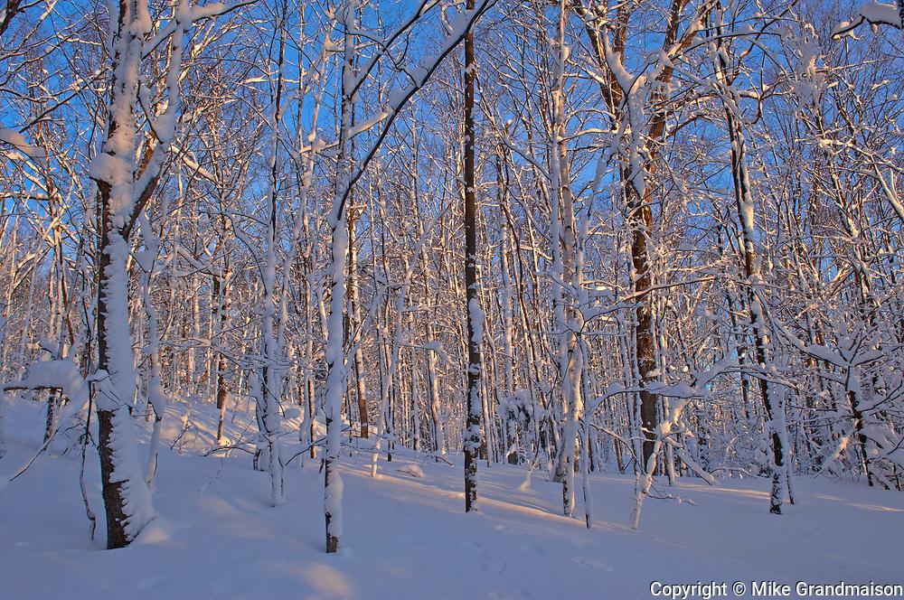Forest after snowfall. Brackenrig Road. Muskoka Country.<br />Near Port Carling<br />Ontario<br />Canada