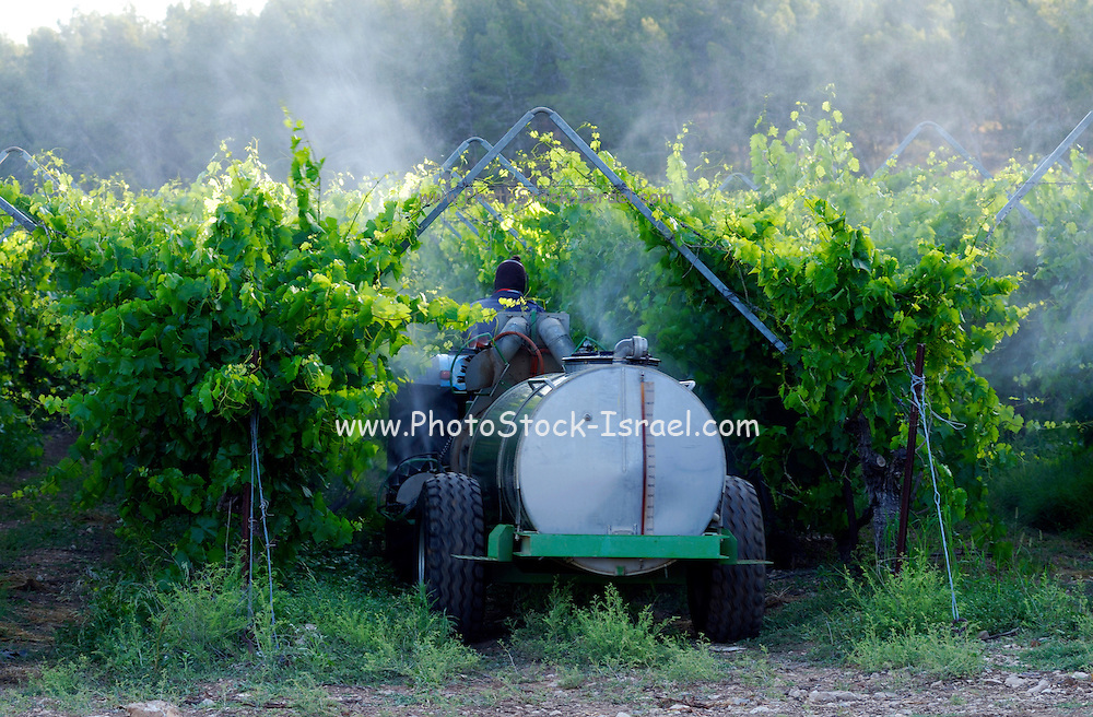 Israel, Northern Negev, man on tractor spraying insecticide on the vines in a vineyard