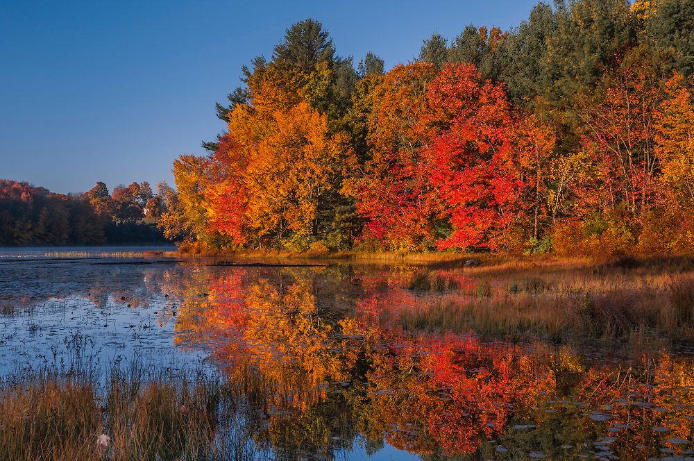 Grasses and fall color at edge of Kelseys Pond, Portland, CT
