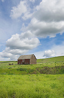 Old Red barn amidst green fields of wheat in the Plause region of Washington State