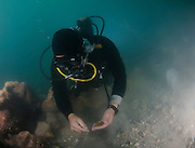 Scuba Divers uncover a hoard of 2000 gold coins from the Fatimid period (eleventh century CE) in the ancient harbour of Caesarea