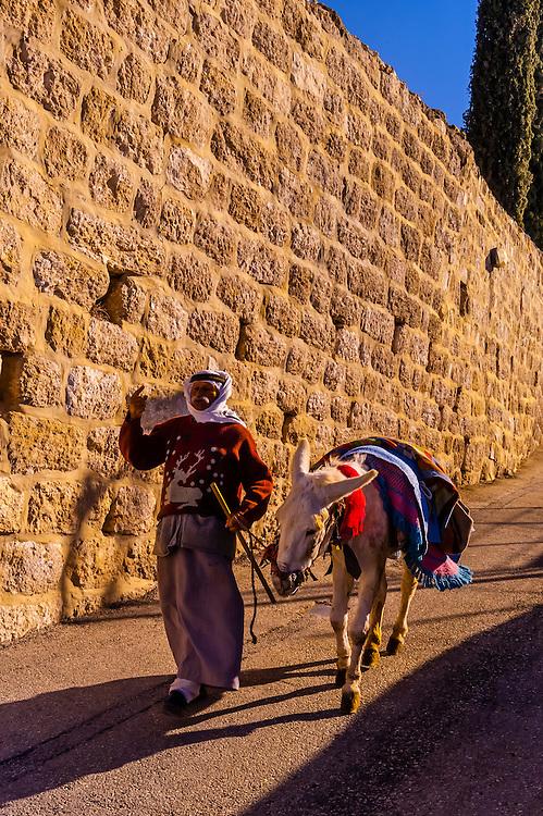Palestinian Arab man with his donkey, Mount of Olives, Jerusalem, Israel.