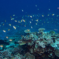 Maldives Coral Reef teaming with life