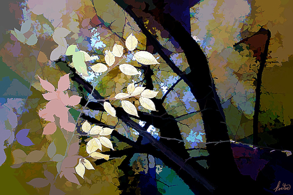 Abstract image of bright yellow leave in the dark forrest.