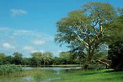 Nsumu Pan, Mhkuze Game Reserve, South Africa