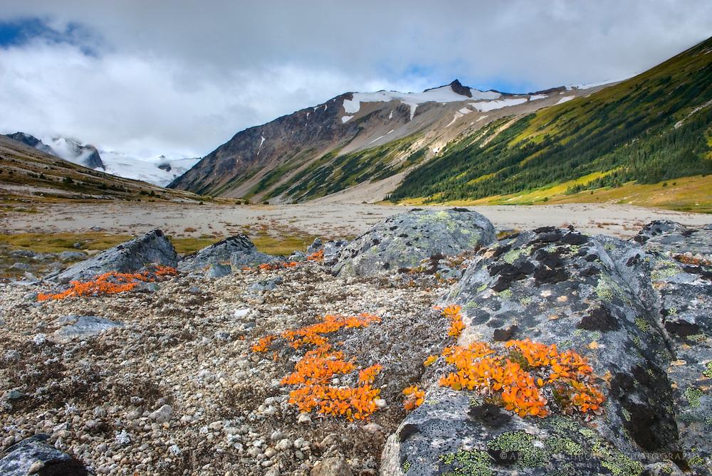 Salal Peak 2530 m (8301 ft) seen from Athelney Pass, Coast Mountains British Columbia Canada