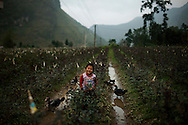 Geese surround a small boy standing in a large rose garden in Moc Chau Province, Vietnam, Southeast Asia