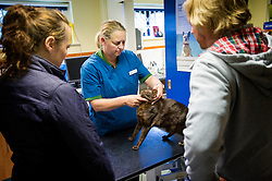 Consultation with cat and owners at Rushcliffe Veterinary Surgery, Nottingham, UK.