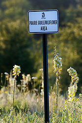 """""""Wildflower Area"""" sign near Arkansas yucca (Yucca arkansana) and other wildflowers on Blackland Prairie remnant, White Rock Lake, Dallas,Texas, USA"""