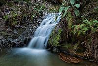 090-P91818<br /> <br /> Portola Redwoods State Park<br /> ©2016, California State Parks.<br /> Photo by Brian Baer
