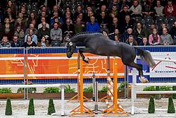 145, Miraculeus-Larus<br /> KWPN hengstenkeuring - 's Hertogenbosch 2020<br /> © Hippo Foto - Dirk Caremans<br />  29/01/2020