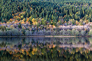 """Fall foliage colours reflecting on the surface of Deer Lake in Sasquatch Provincial Park near Harrison Hot Springs, British Columbia, Canada. Photographed from """"The Point"""" at Deer Lake near the Bench Campground."""